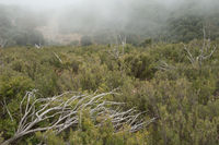 Dead trees and mediterranean forest in the fog. Natural Park of the Mountains and Canyons of Guara. Huesca. Aragon. Spain.
