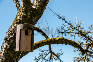 Little bird table on an old mossy apple tree