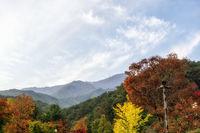 autumn foliage in yongmunsa