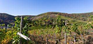 Weinhänge im Ahrtal im Herbst