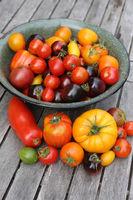 Verschiedene Sorten Tomaten aus dem eigenen Garten