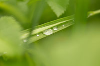 Drop of dew in morning on leaf with sun light
