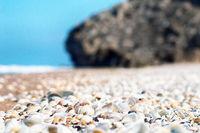 shell beach on the sea