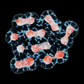 Mitosis, The Process Of Cell Division And Multiplication. Medicine Scientific Concept