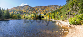 trout pond in Alsace