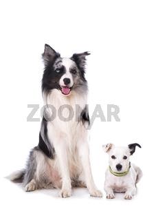 Mischlinghund auf weißem Hintergrund