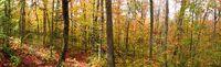 Herbstlich gefärbter Laubwald während des Indian summer