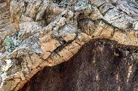Rindenquerschnitt einer teilweise geschälten Korkeiche (Quercus suber), Algarve, Portugal