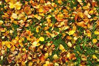 bunte Herbstblätter Struktur