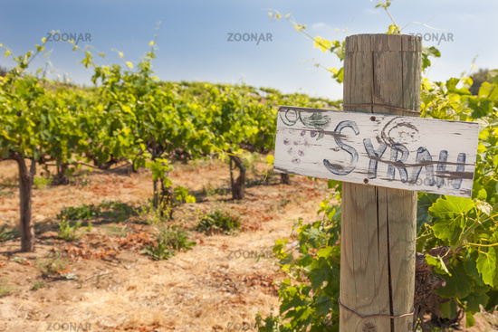 Syrah Sign On Wooden Post In A Grape Vineyard