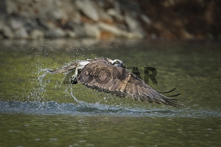 Osprey comes up empty.