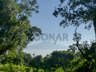 majestic snowcapped Mount Kilimanjaro in Tanzania framed by palm fronds and trees