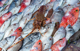 Fresh fish and lobster at the seafood market