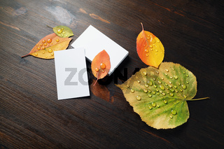 Business cards, autumn leaves