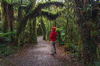 Man Enjoying New Zealand rainforest details landscape