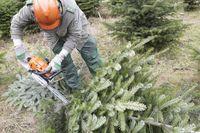 Weihnachtsbaum, Weihnachtsbäume,