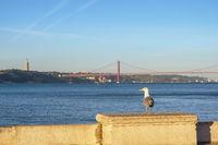 Lisbon Portugal city skyline at Lisbon port and seagull