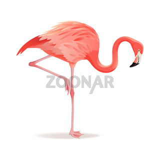 Red and pink flamingo vector illustration. Cool exotic bird standing, decorative design elements collection. Flamingo Isolated on white background