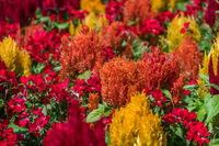 Abundance of colorful flowers in spring