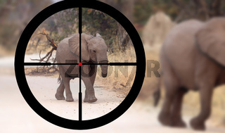 Hunting: African elephant in it's natural habitat