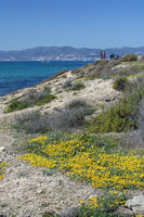 Wild yellow spring flowers blue Mediterranean sea