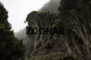 Vegetation Kilimandscharo