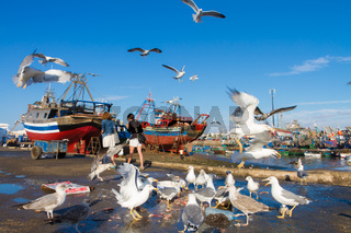 Flocks of seagulls flying over Essaouira fishing harbor, Morocco. Fishing boat docked at the Essaouira port waits for a full repair with a boat hook in the foreground