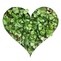 Sprout green plants a heart shape