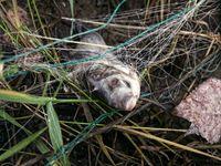 Forsaken net with dead fish