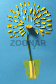 Flower without petals on a blue background. Conceptual image