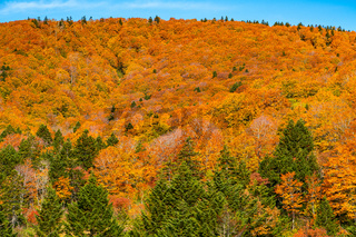Colorful foliage of autumn on the Hakkoda Mountain