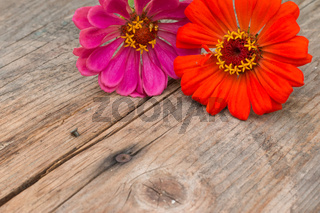 Arrangement of beautiful cute flowers on a rustic wooden table. Copy space.
