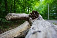 Ein alter Baumstamm an Wegesrand