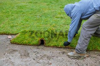 Gardener installing natural grass turf professional installer beautiful lawn field.