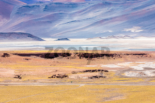 Chile Atacama desert red rocks lagoon