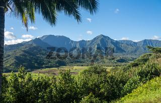 Taro fields in Hanalei valley from Princeville overlook