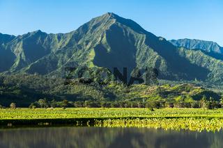 Taro leaves frame the Na Pali mountains in Kauai