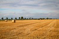Strohballen auf einem abgeernteten Feld