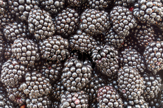 Blackberry fruit - blackberries. Background of very large blackberry fruit. Texture of black berry. Nutritional background. Blackberry texture - large blackberries. Vegetarian natural food. Vitamins.