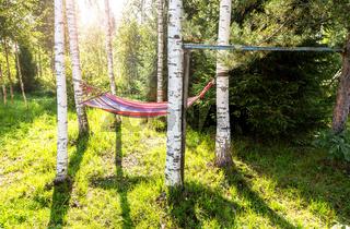 Hammock hanging in the birch trees in summer