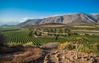 Beautiful landscape of Cape Winelands, wine growing region in South Africa