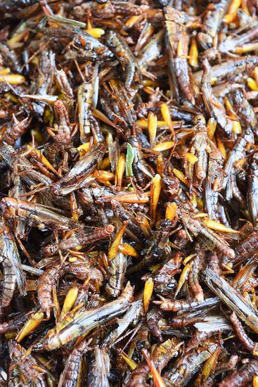 frittierte Heuschrecken, Chillva Markt, Phuket, Thailand
