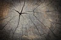 Texture of wood stump