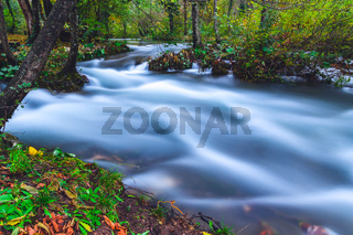 Stream flowing through in the forest