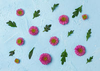 Pink chrysanthemums on a blue background.