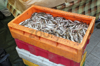 The fresh sea Smelt  fish in plastic industrial containers.