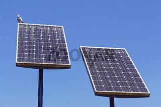 Solar panels bird poop