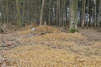 Rodungsbeginn... Hambahcer Forst *Nordrhein-Westfalen*