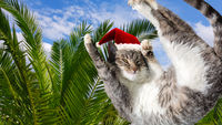 Flying or jumping funny tabby santa cat in red hat on vacation paradise palm tree background. Christmas panoramic greeting card, copy space. Holiday relaxation template