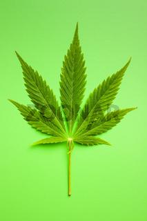 Green cannabis leaf.